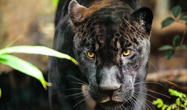 Ouverture du zoo de Vincennes : les animaux se préparent
